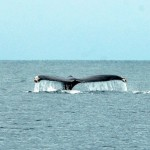 09-whale-tail-dive