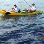 13-whale-shark-and-kayakers