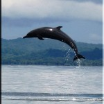 spotted dolphin in flight